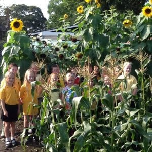 Gardening Club with their sunflowers.